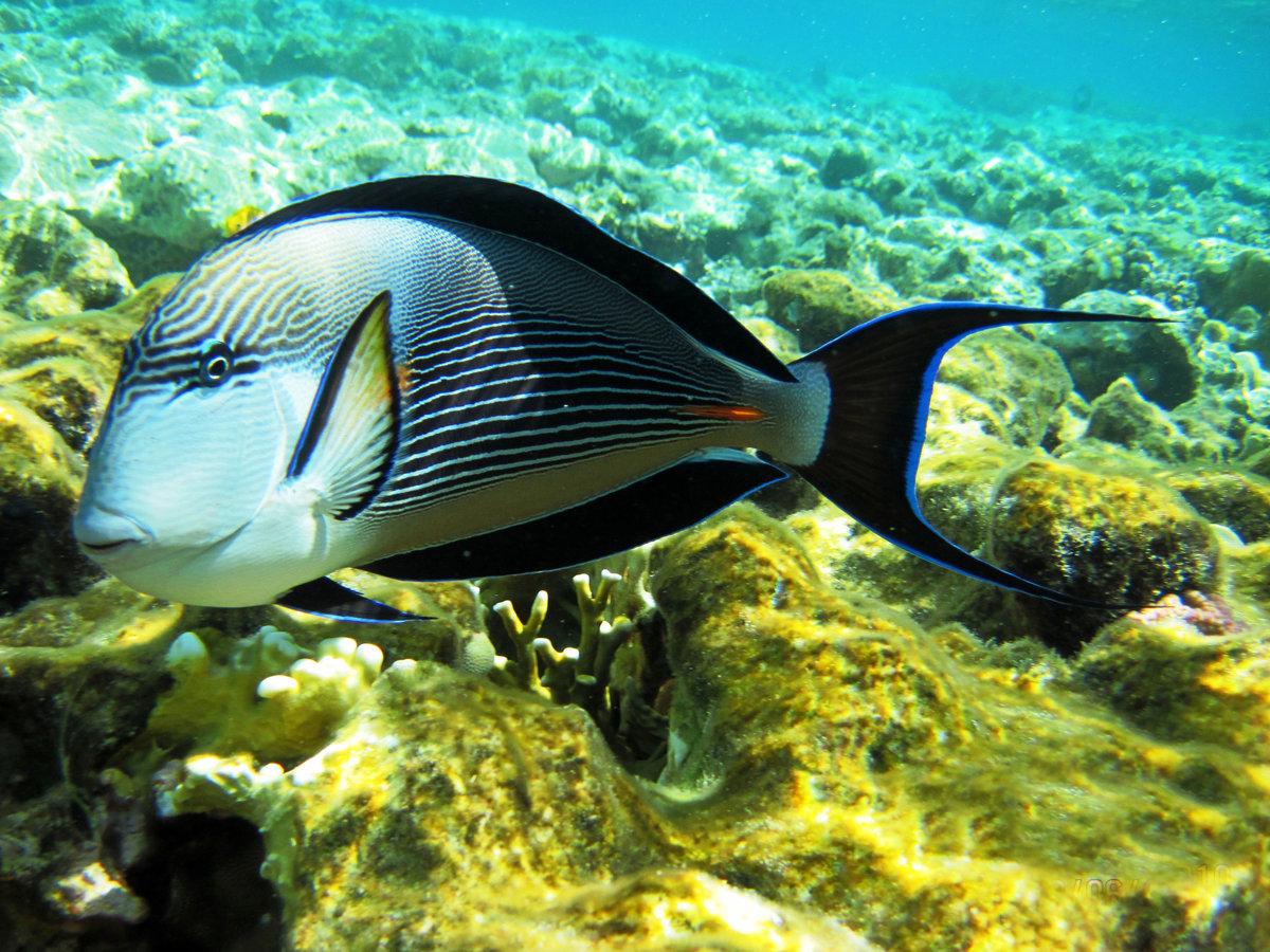 рыбы красного моря фото с описанием трансформаторные