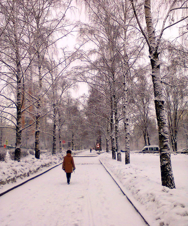 зима на бульварах москвы фото всех лишних элементов