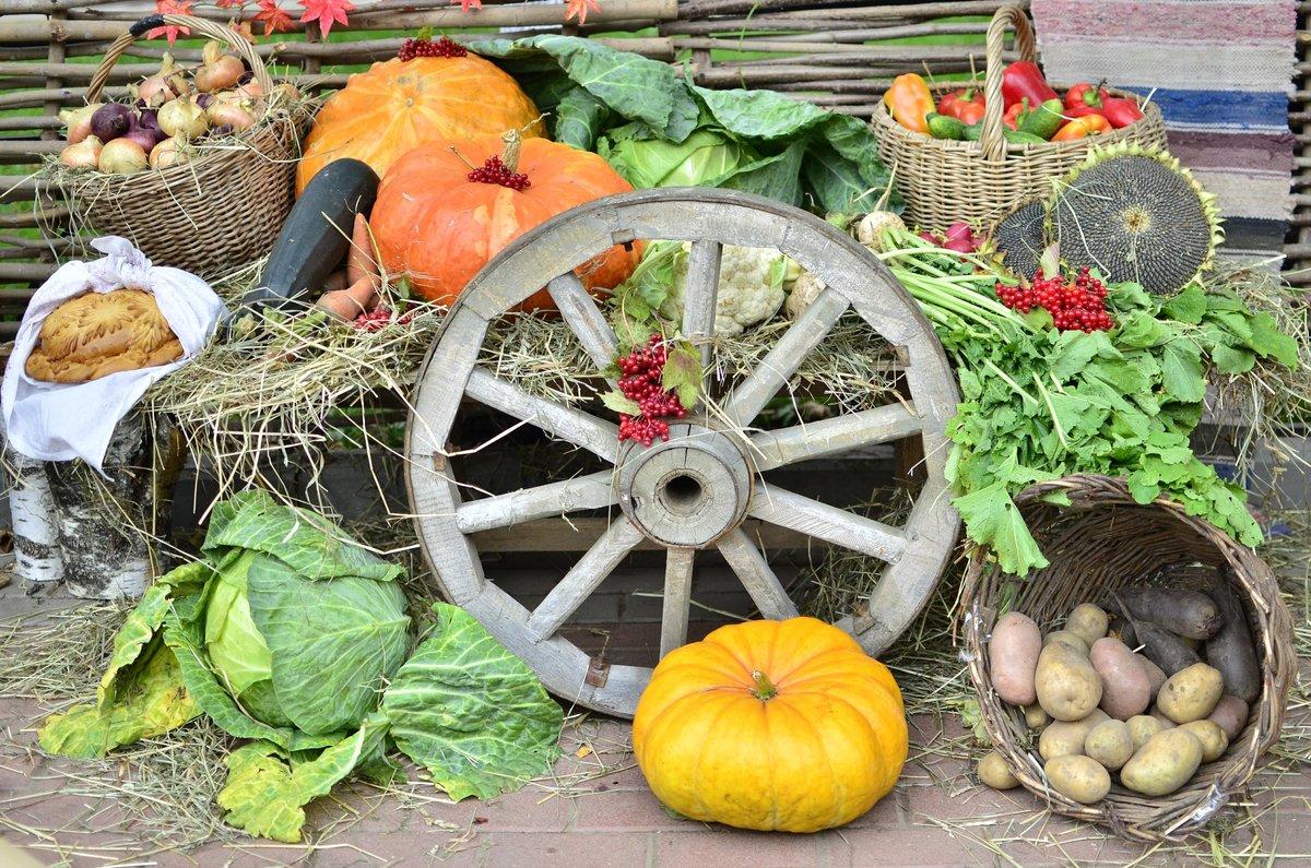Смыслом спокойной, картинки про урожай прикольные