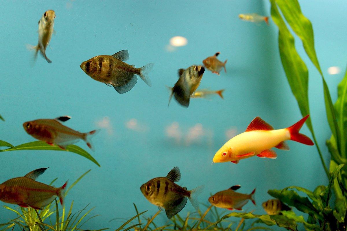 китуашвили друзей картинки с рыбками какие необходимо