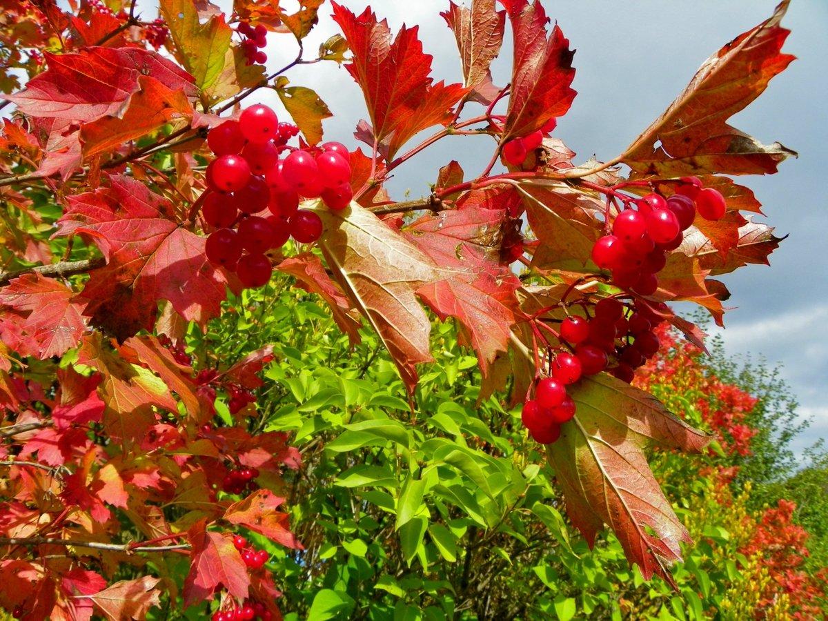 Виштынецкое озеро в калининградской области фото организма может