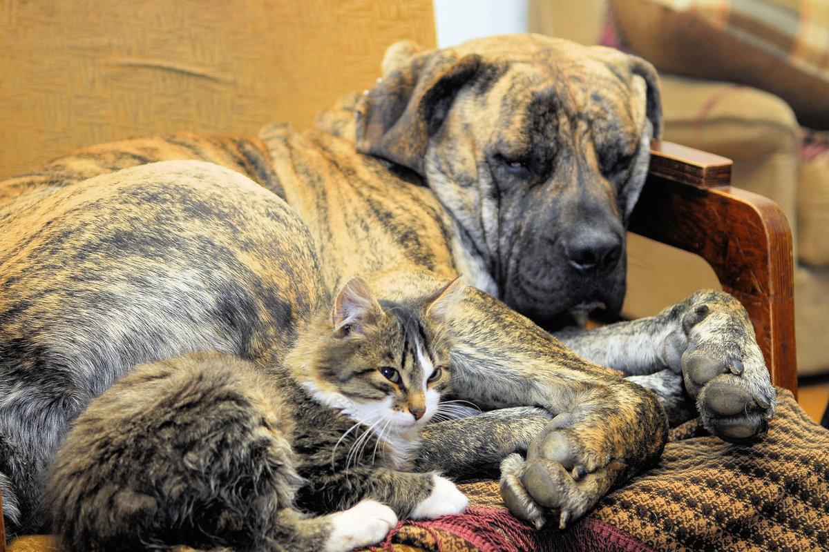 Интересные фото собак и кошек