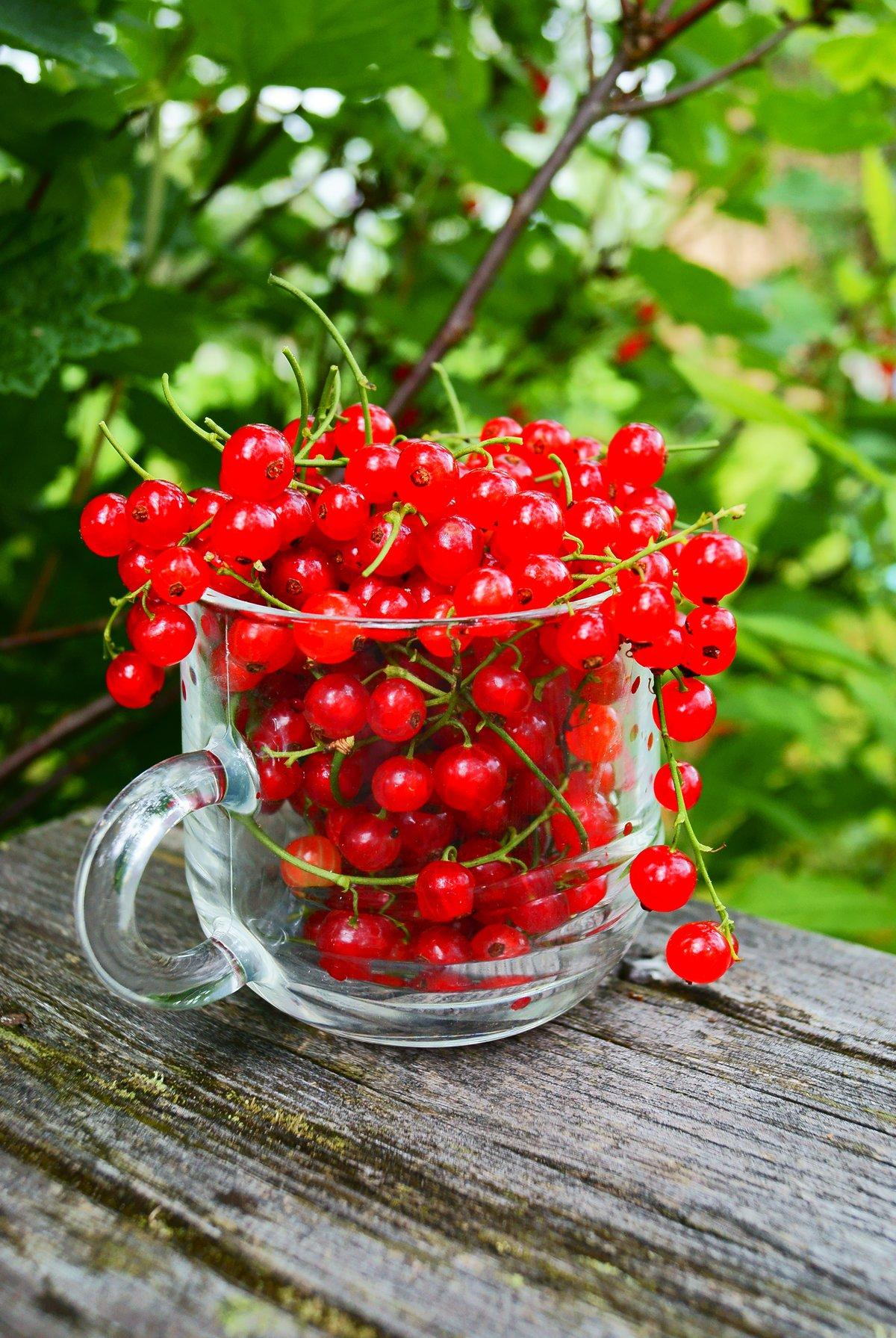 Картинка ягоды в саду