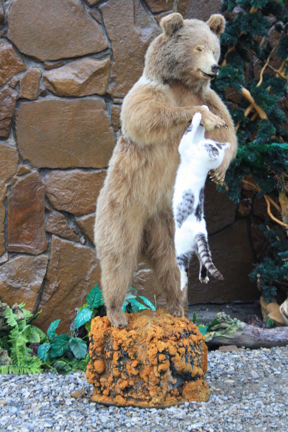 этого картинки медведь и кошка раздетые сучки