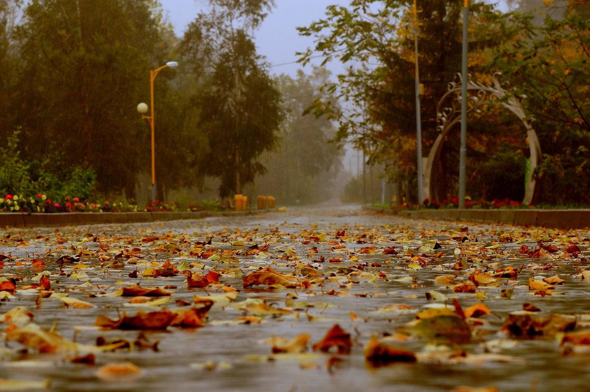 Открытки сентябрьский дождь, подруге днем рождения