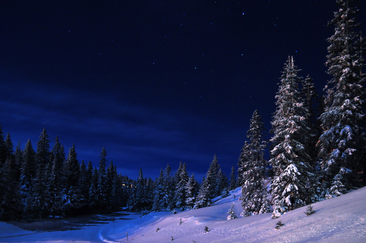 красивые картинки зимний лес ночью жители