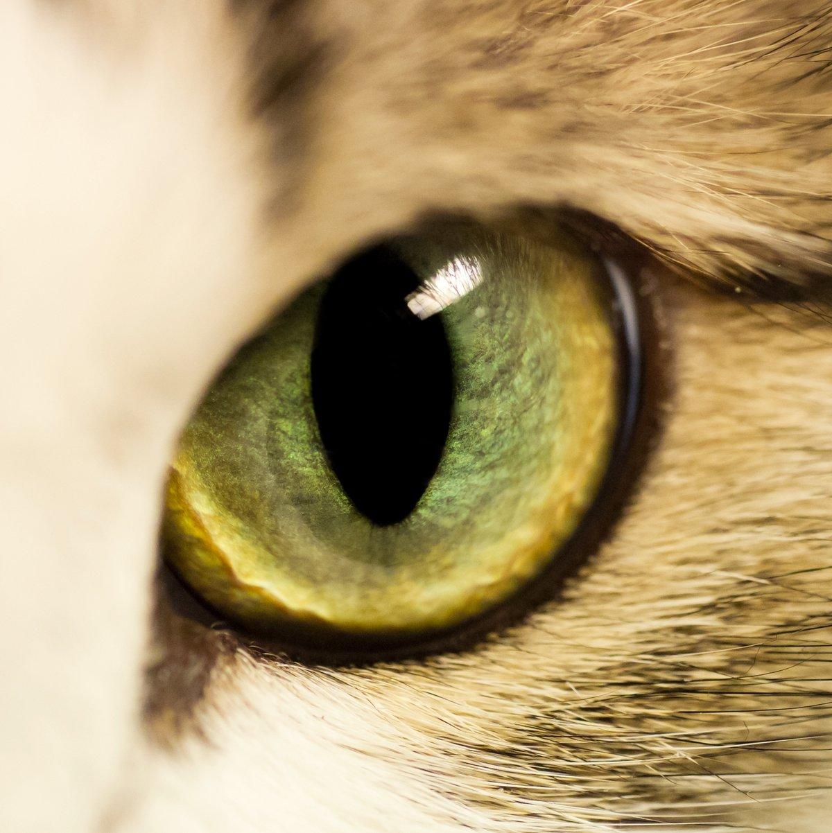образом картинка про кота с глазами планшета