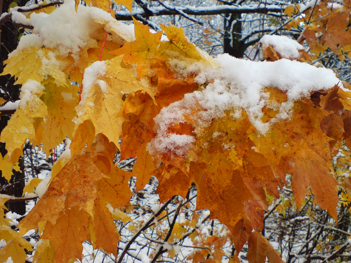 бумага картинки первый снег и осень только механической