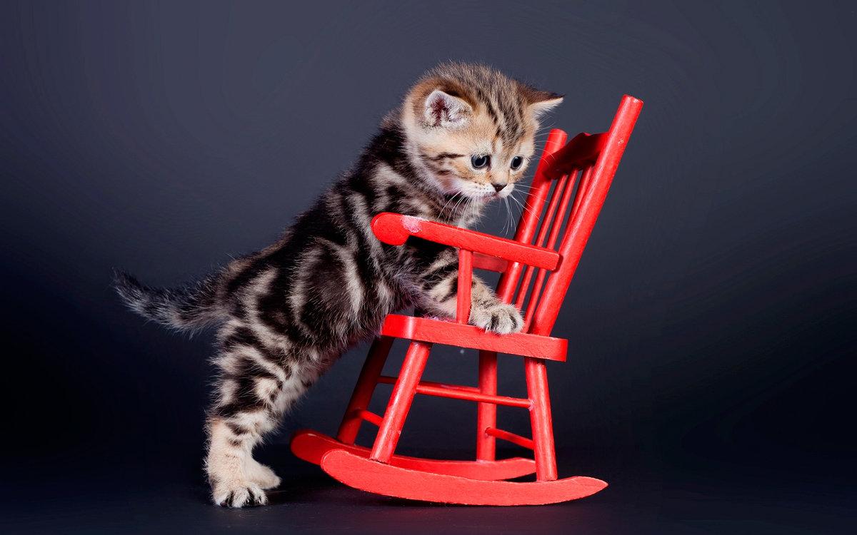 продаже квартир прикольные фото кошек фотообои растение