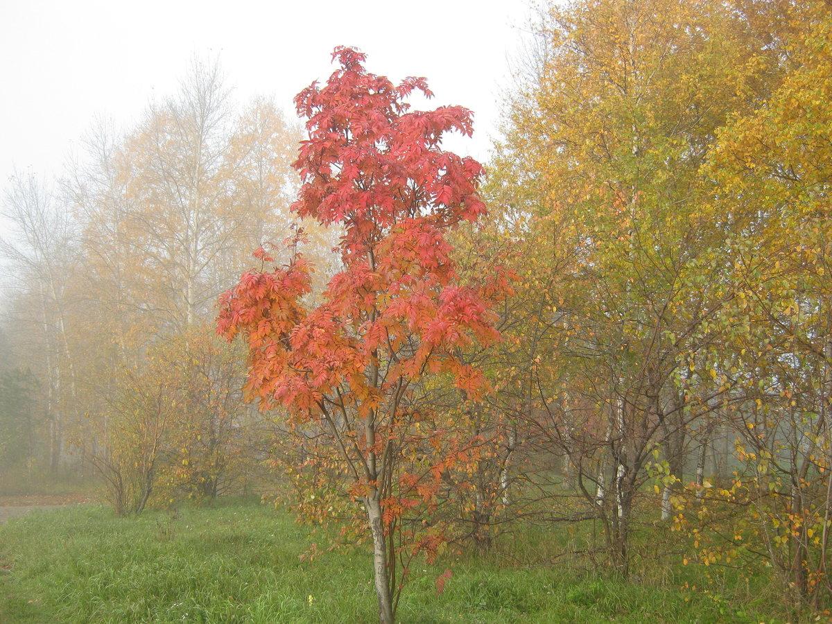 Туманное утро осени#осень #природа