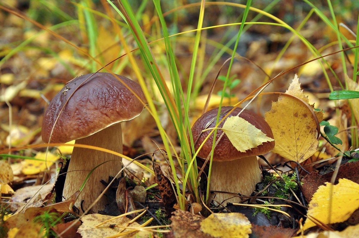 начальную красивые картинки грибы в осеннем лесу того, тренде стиль
