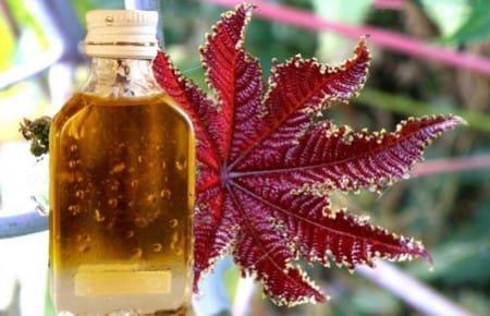 Касторовое масло от папиллом: методы лечения касторкой отзывыhttps ...