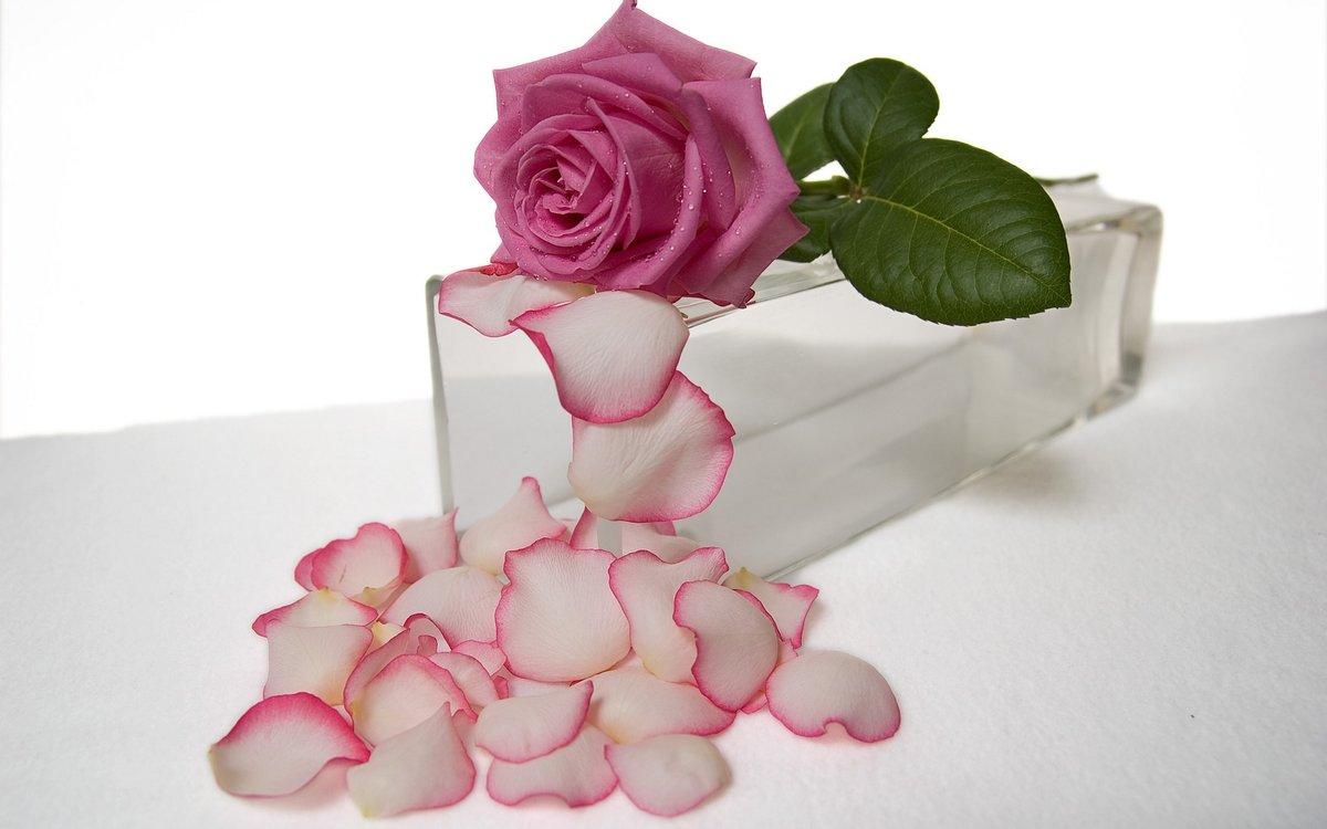Открытки с лепестками роз, приколы