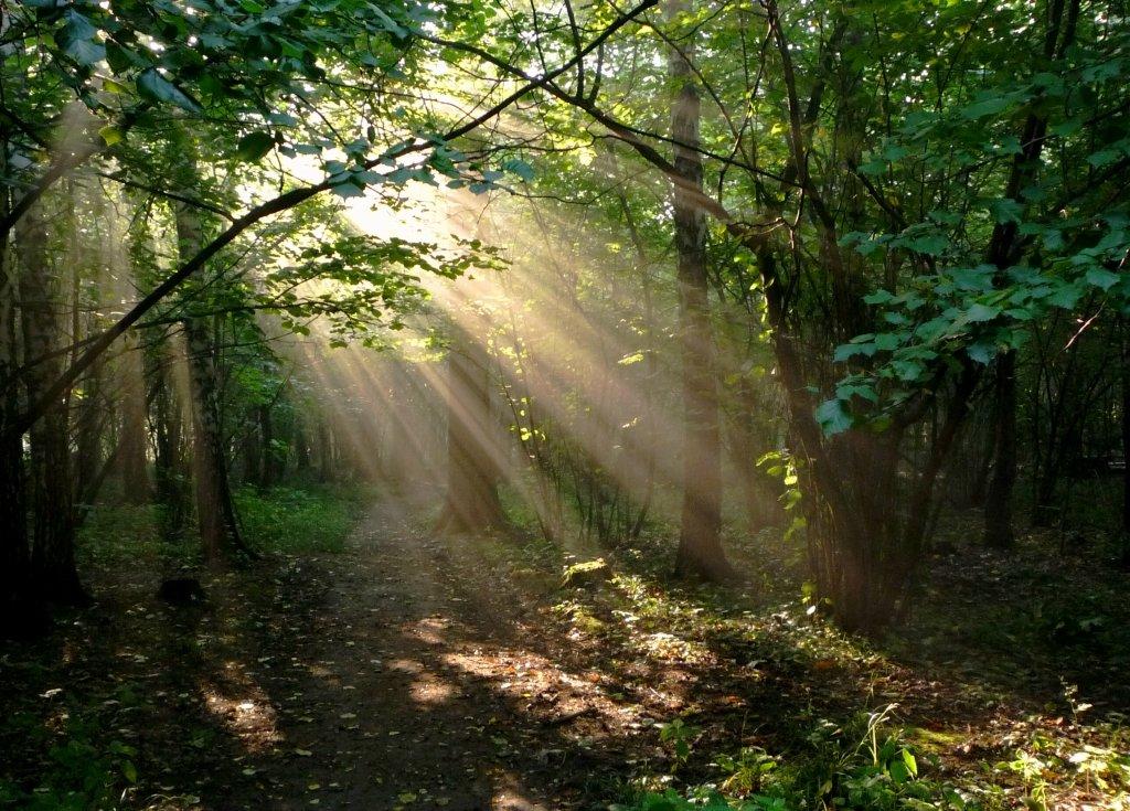 лес летним утром картинки цены