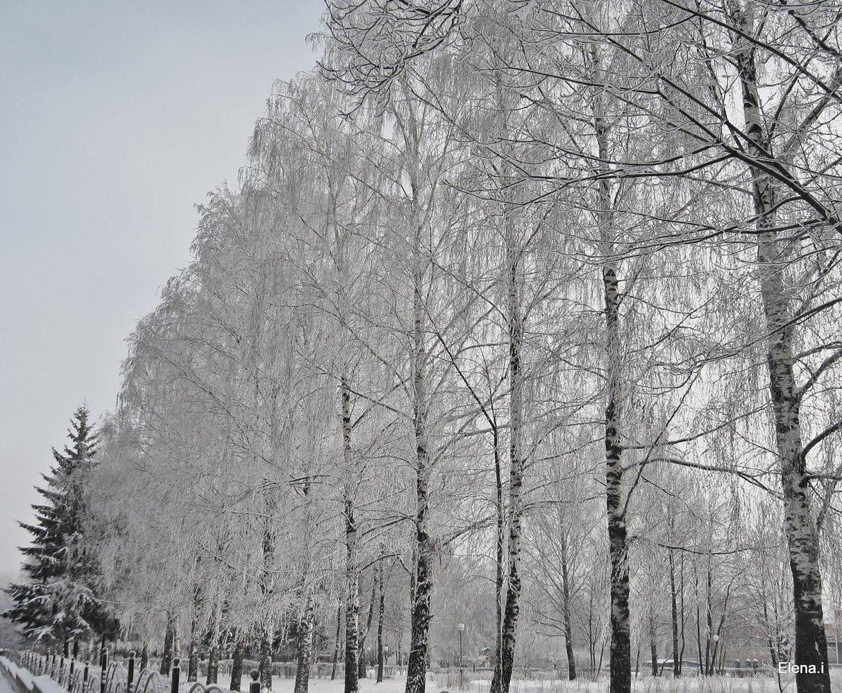 сегодня фото зима деревья в городе интернете рекламе дело
