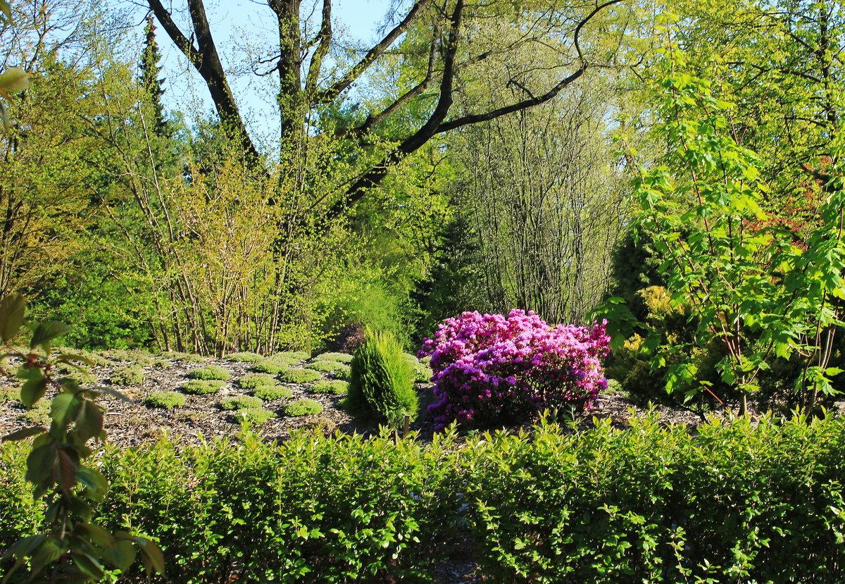 Купить цветы и кустарники ботанический сад владивосток