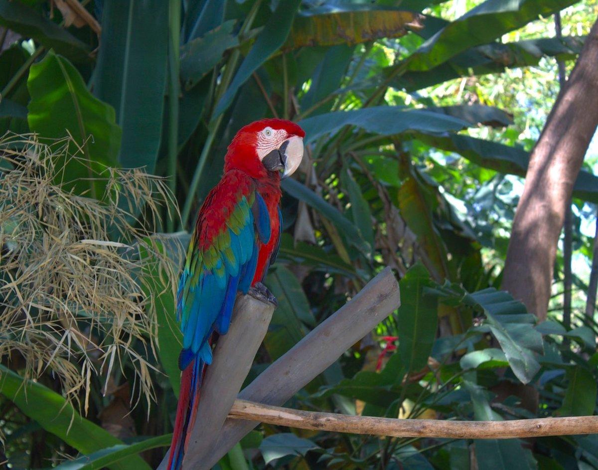 модельной картинки попугаев джунглях владелица животного, изначально