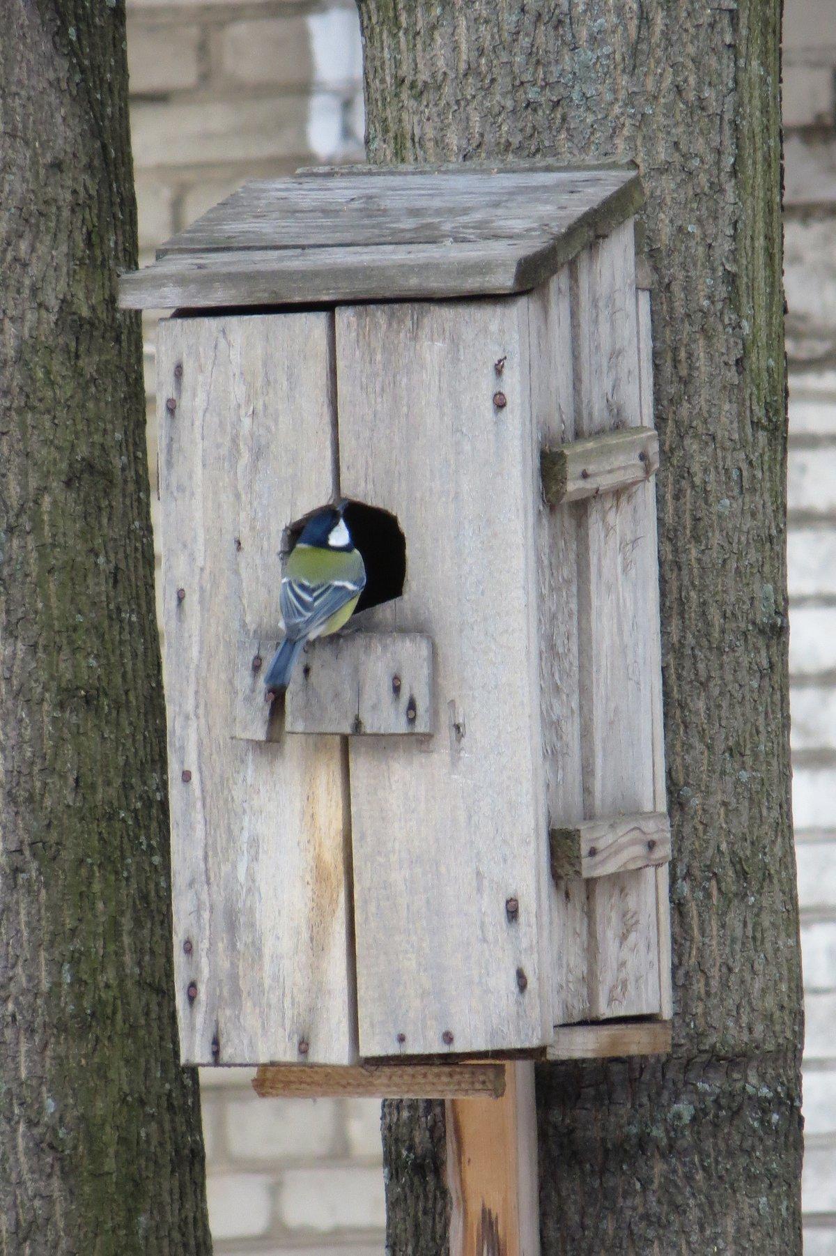 Домик для синички фото