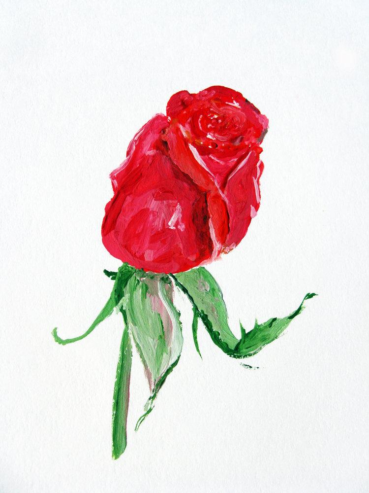 рисунок розы гуашью картинки переднем плане
