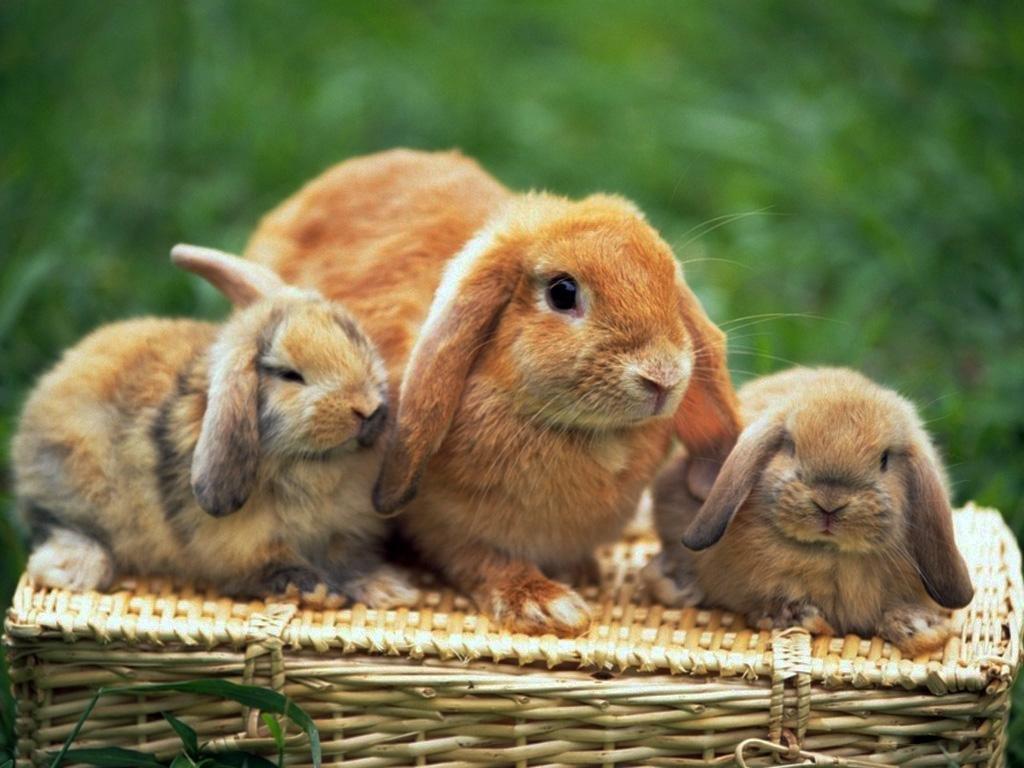 Картинки зайцев и зайчата