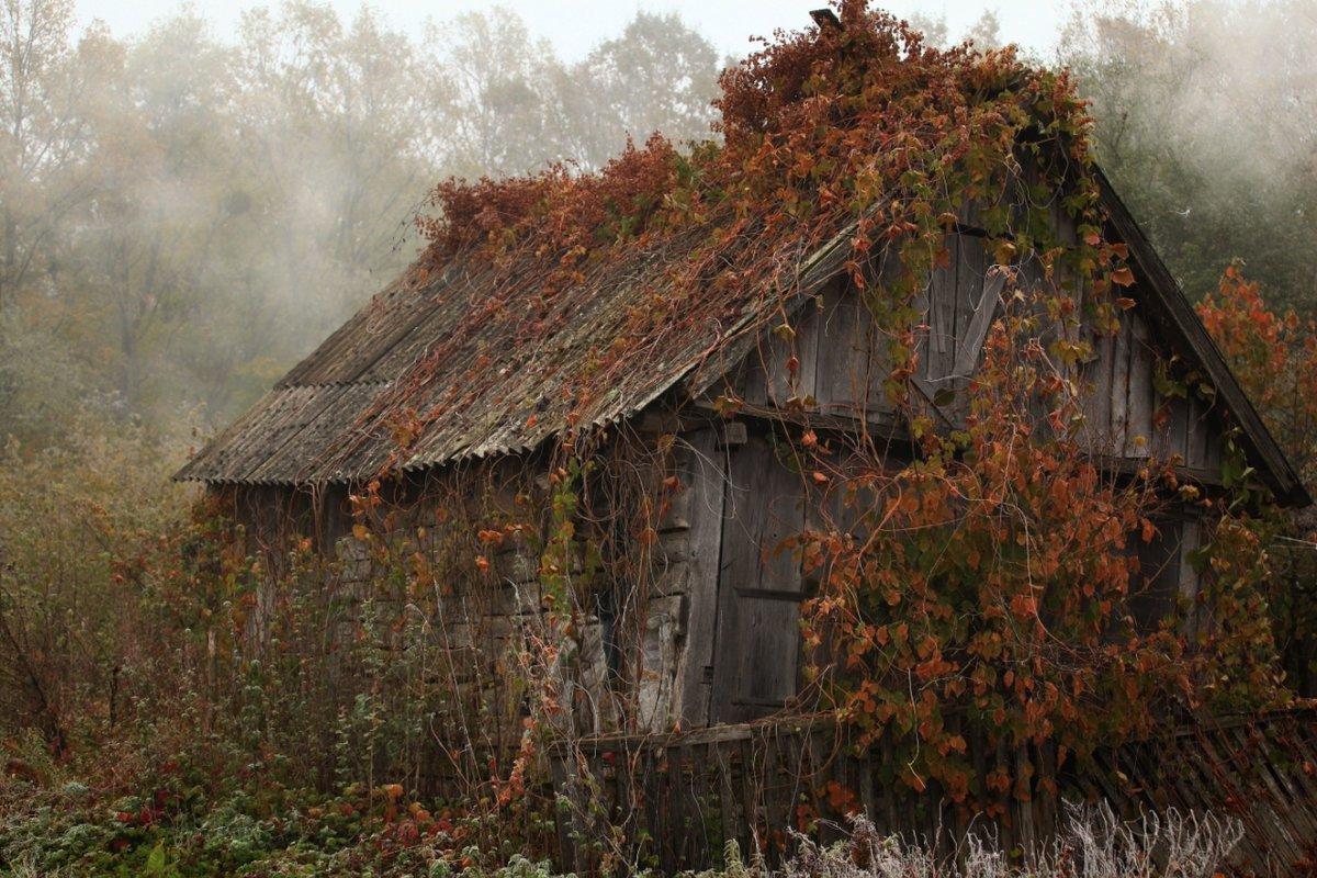 Картинки старый домик, день