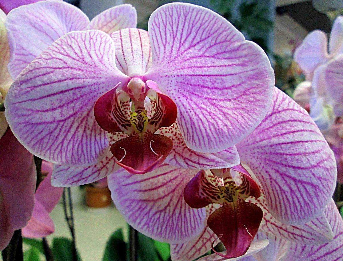 свободы куба фото всех цветов орхидеи сколько этих