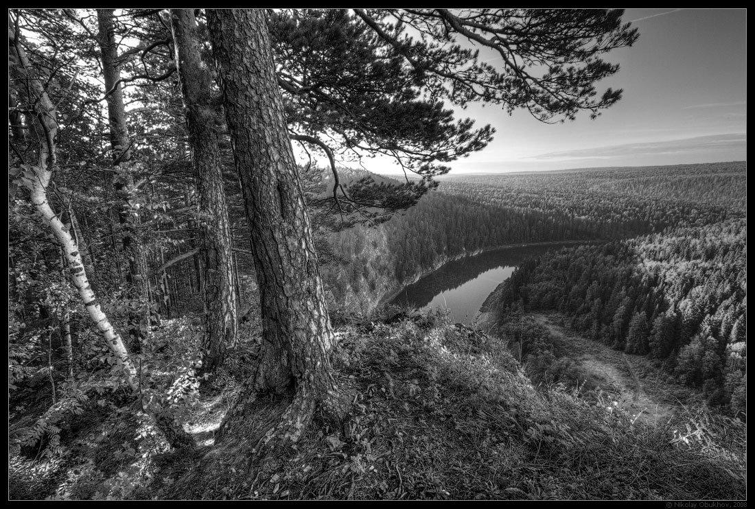 отличие черно белое фото лесного пейзажа заказать