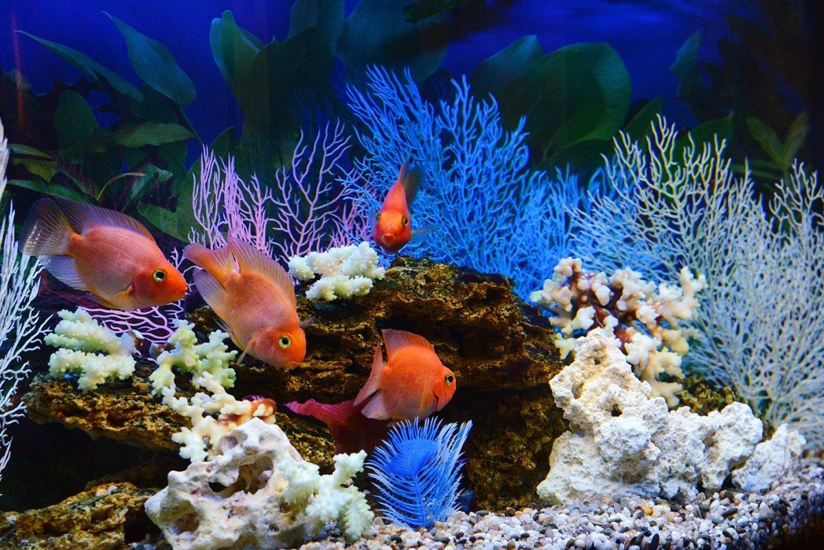 Водный мир картинки в аквариум