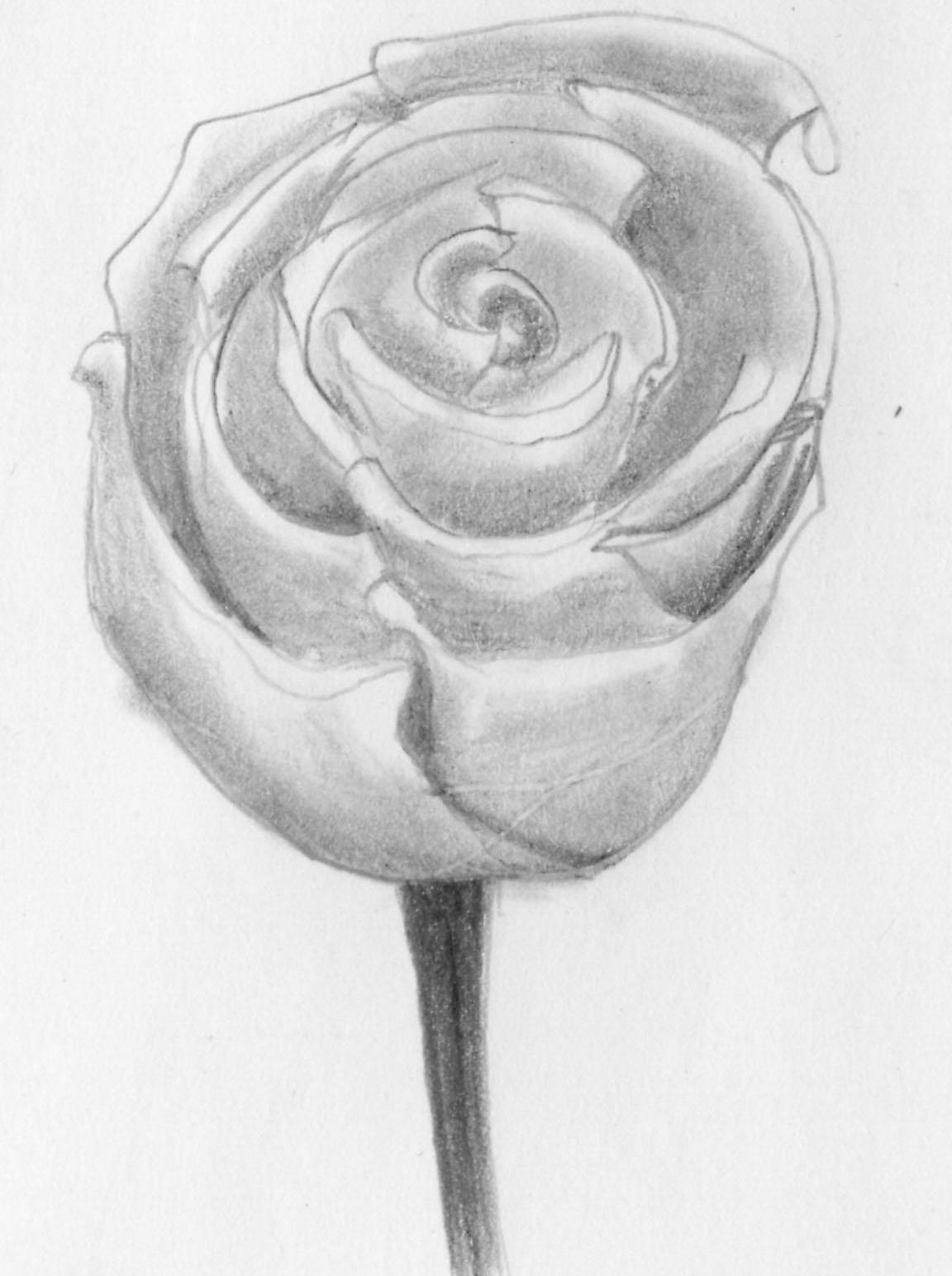 вот владимир роза карандашом фото понравилось видео незабывайте