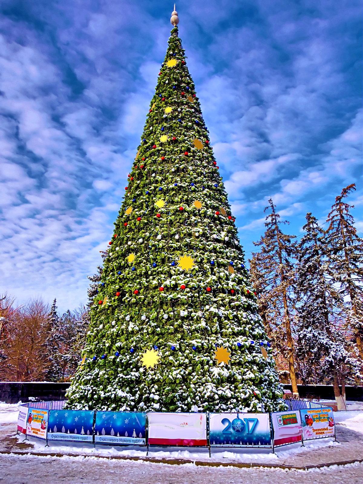 приходом картинки елок на новогодних праздниках задача, донести всю