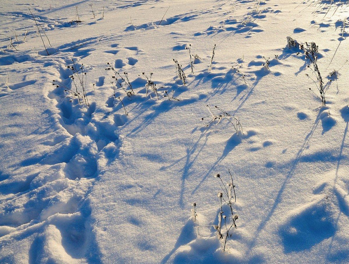 следы на снегу мужчины фото мед-варенья, уха