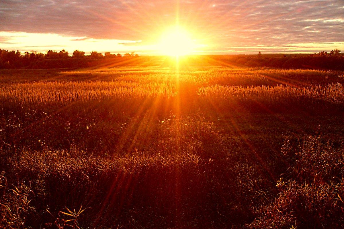 картинка золотой рассвет можете скачать обои