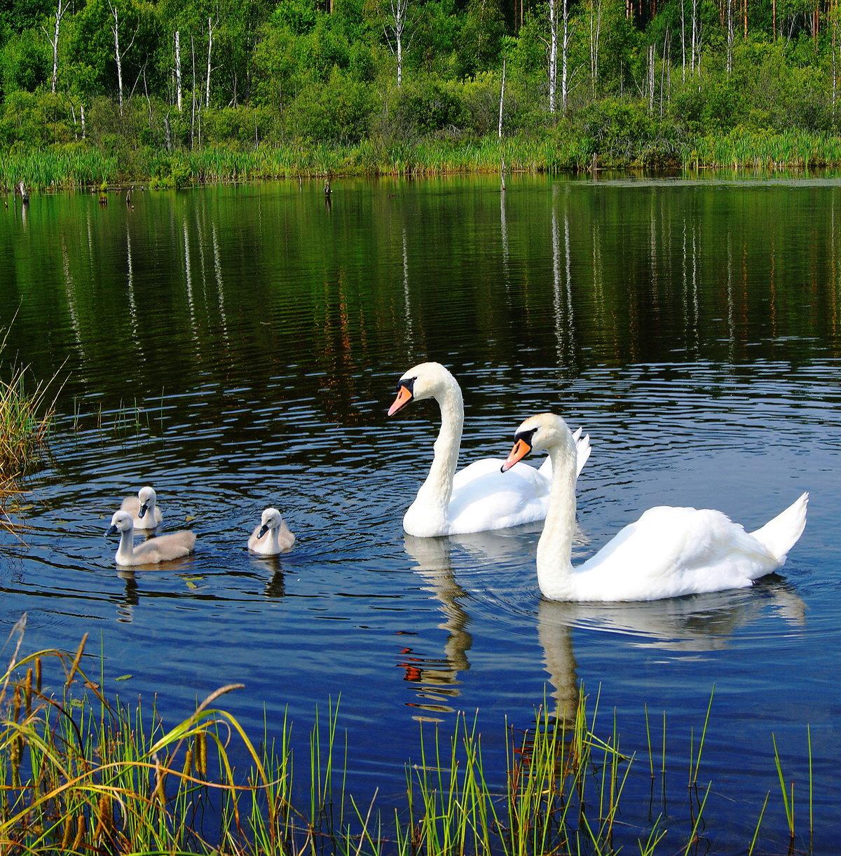 Картинки лебединое озеро природа небесный чертог