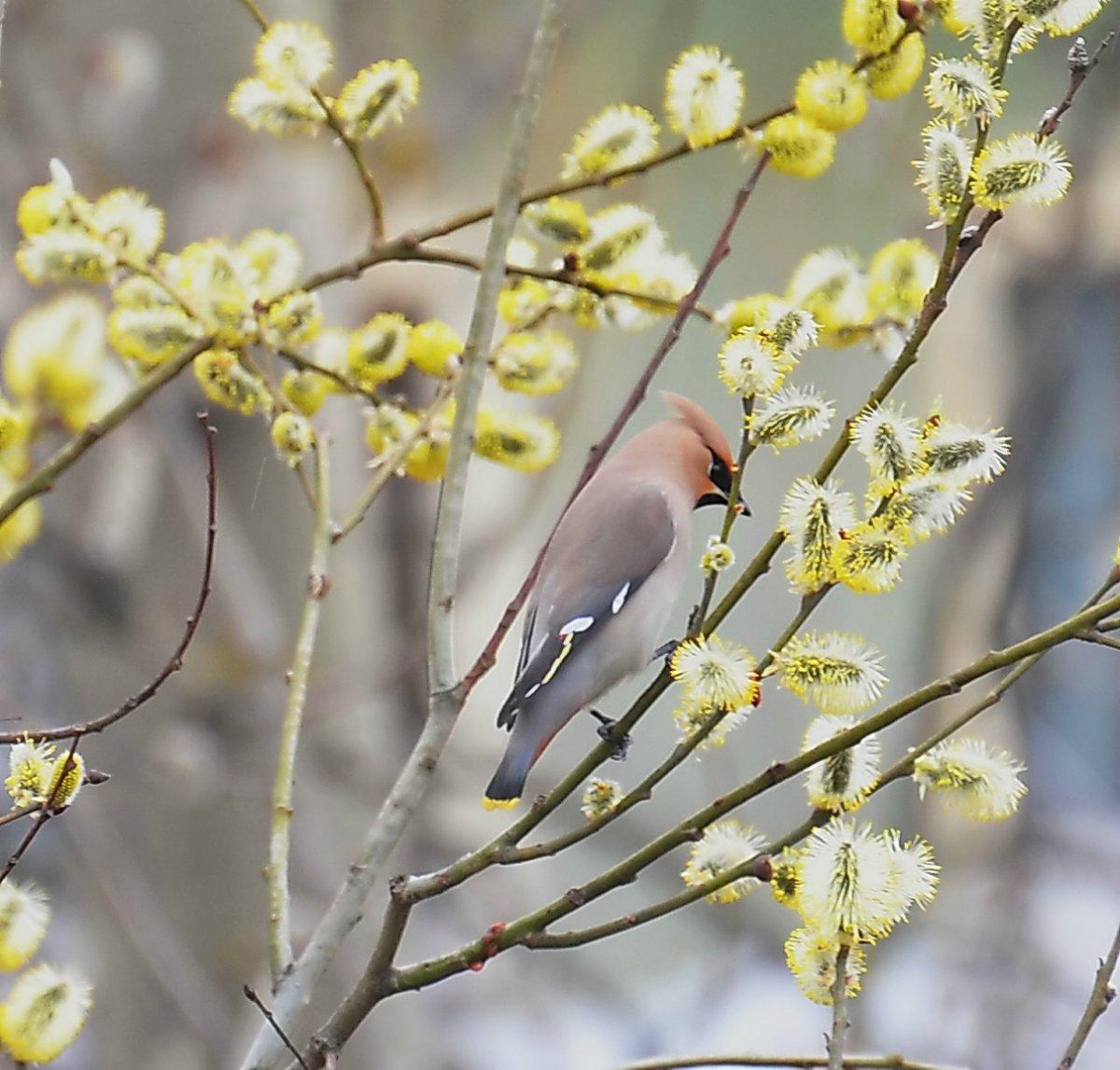 Картинки птица весна