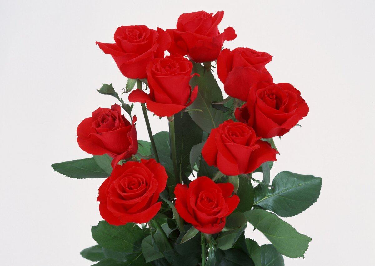 8 марта картинки роза, днем