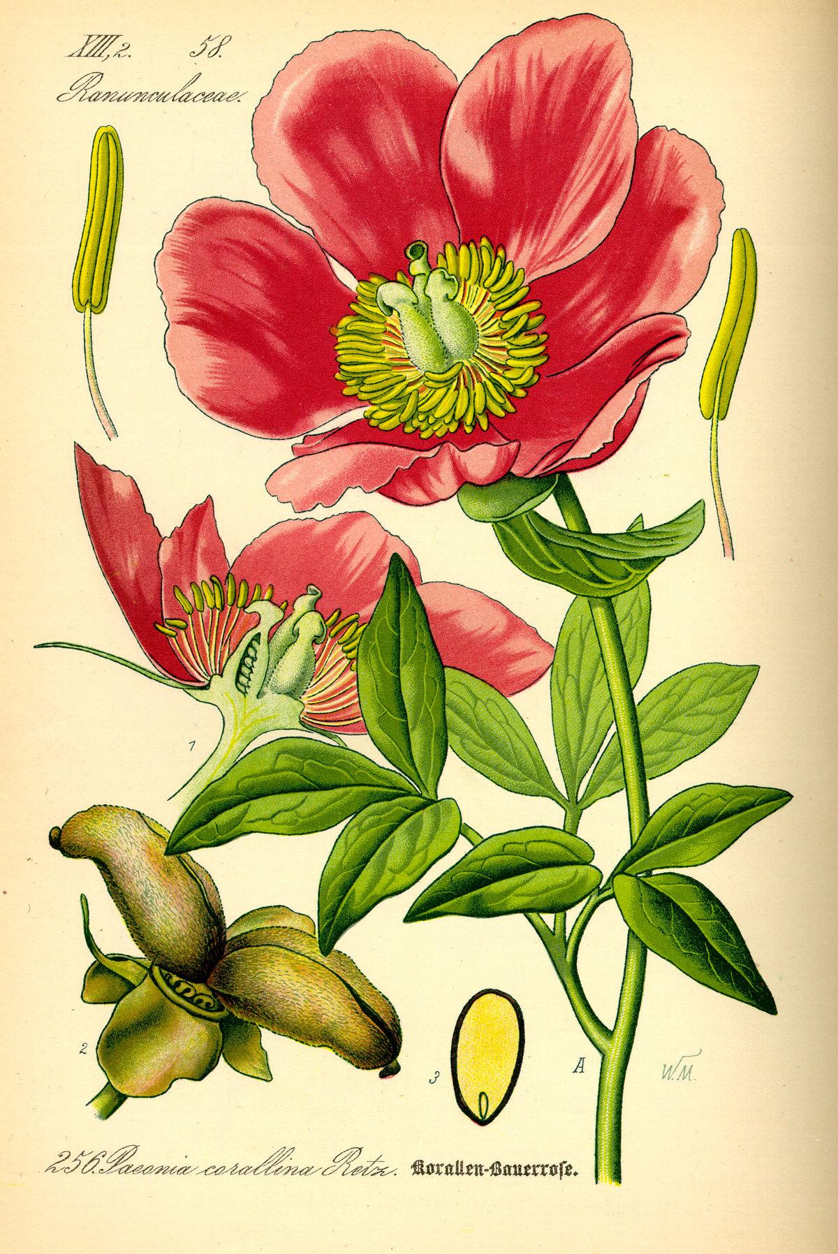 Ботаника фото растения и название