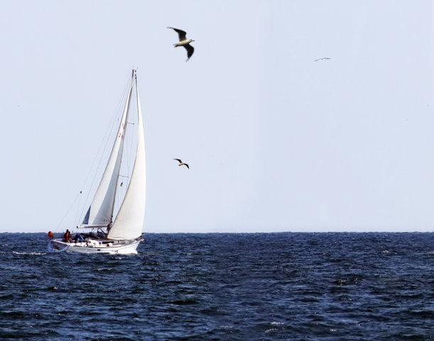 картинки море парус чайки вам обзор