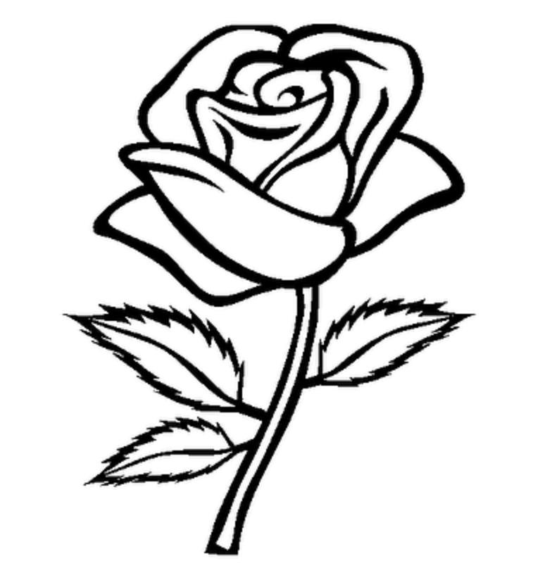 Красивый, картинка розы для срисовки