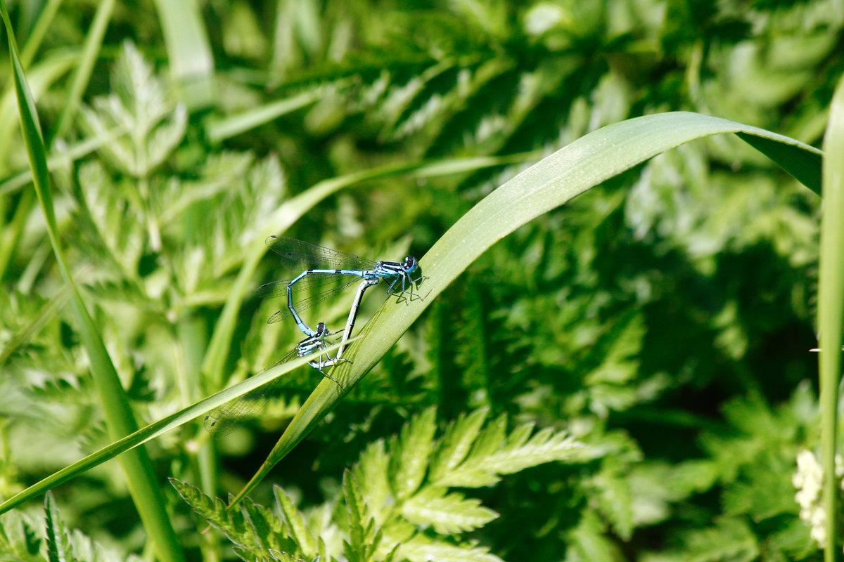 каждой насекомые в подмосковье картинки выглядит