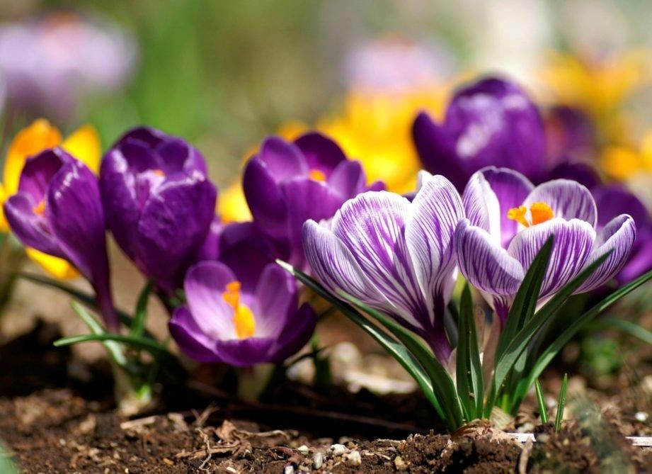 Картинки прекрасной весны