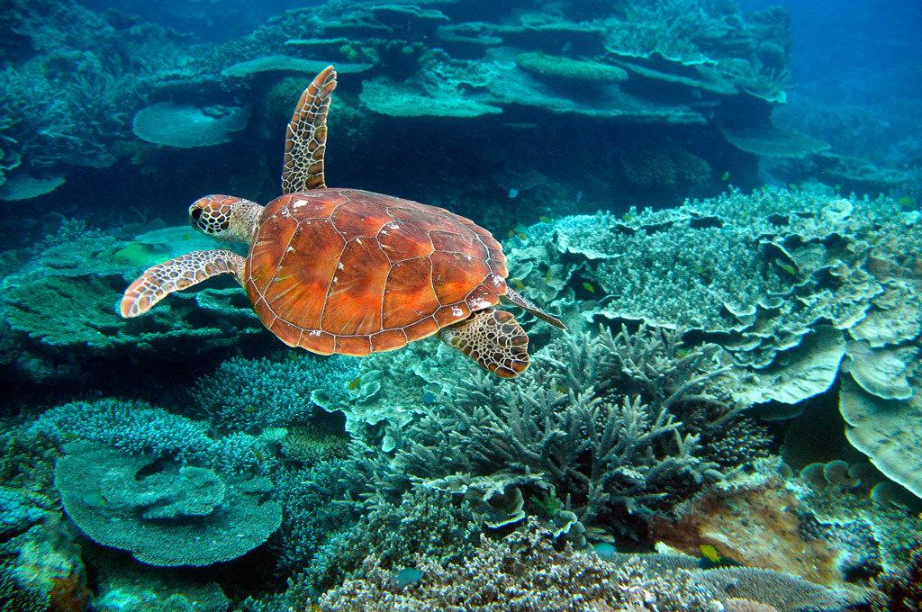 Морские животные австралии картинки
