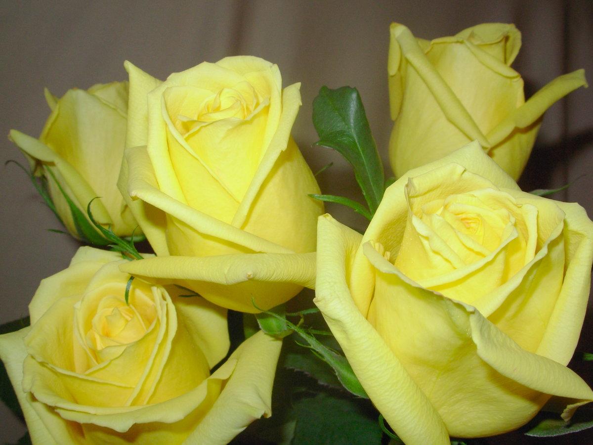 Желтая роза открытки