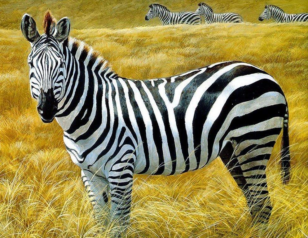Картинки из животных