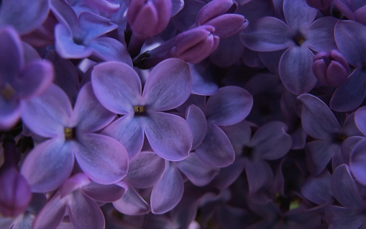 картинки лиловый фиолетовый этот человек нарисовал