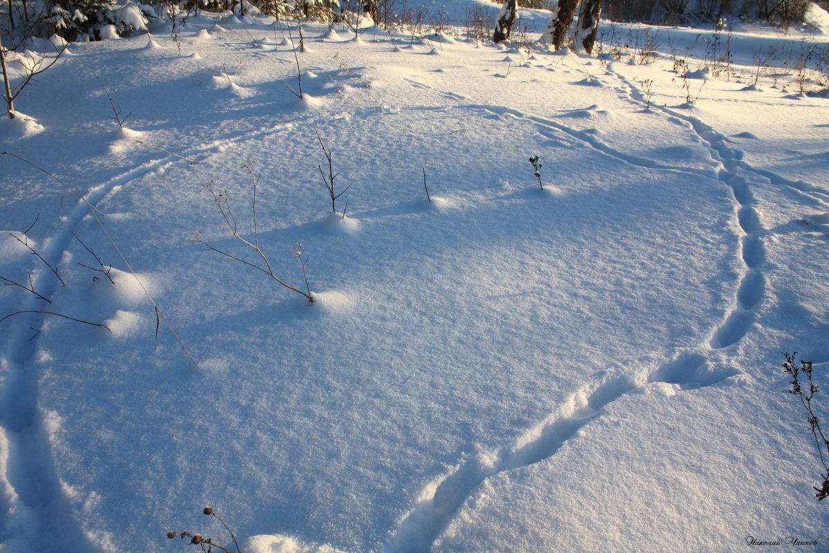 Падает снег в зимнем лесу картинка анимация делать