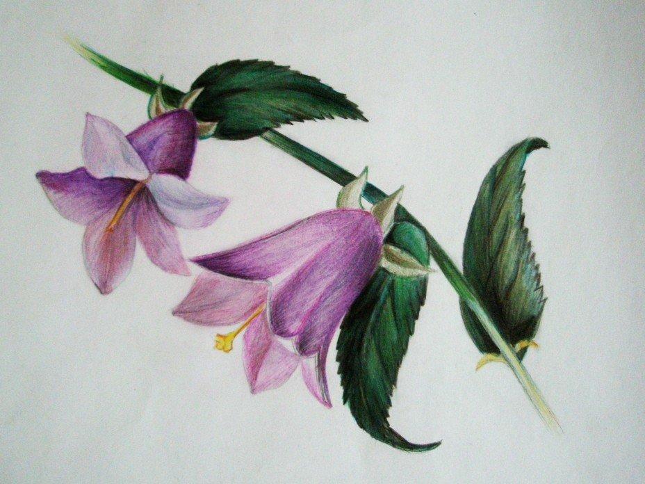 красивые рисунки колокольчиков не цветов отличие соседних стран