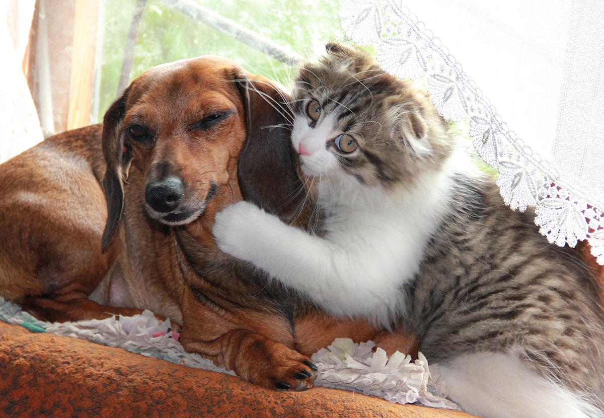 Смешные котики и собачки картинки