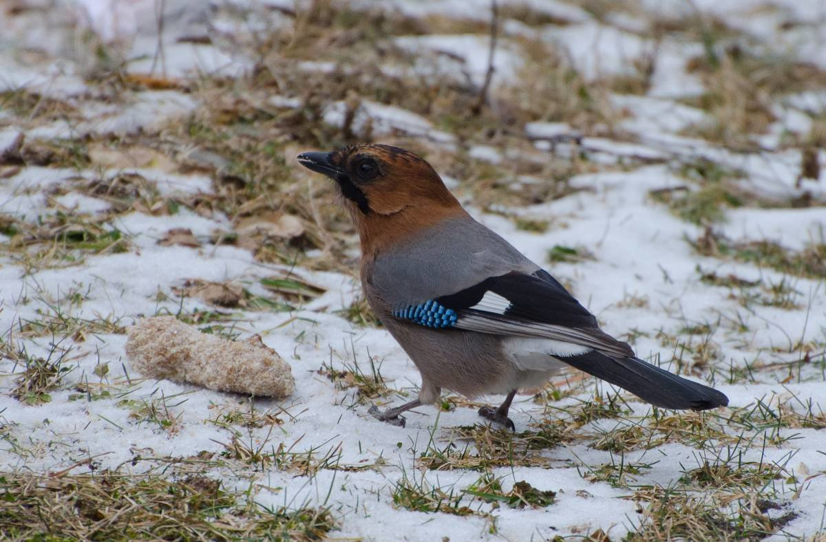 благодарен лесные птицы фото названия стен петропавловской крепости