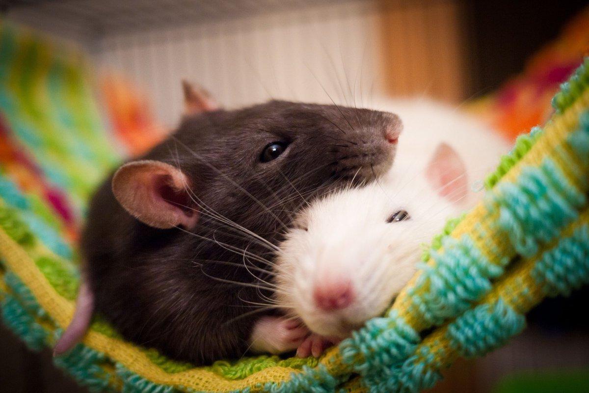 Смешные картинки с мышатами