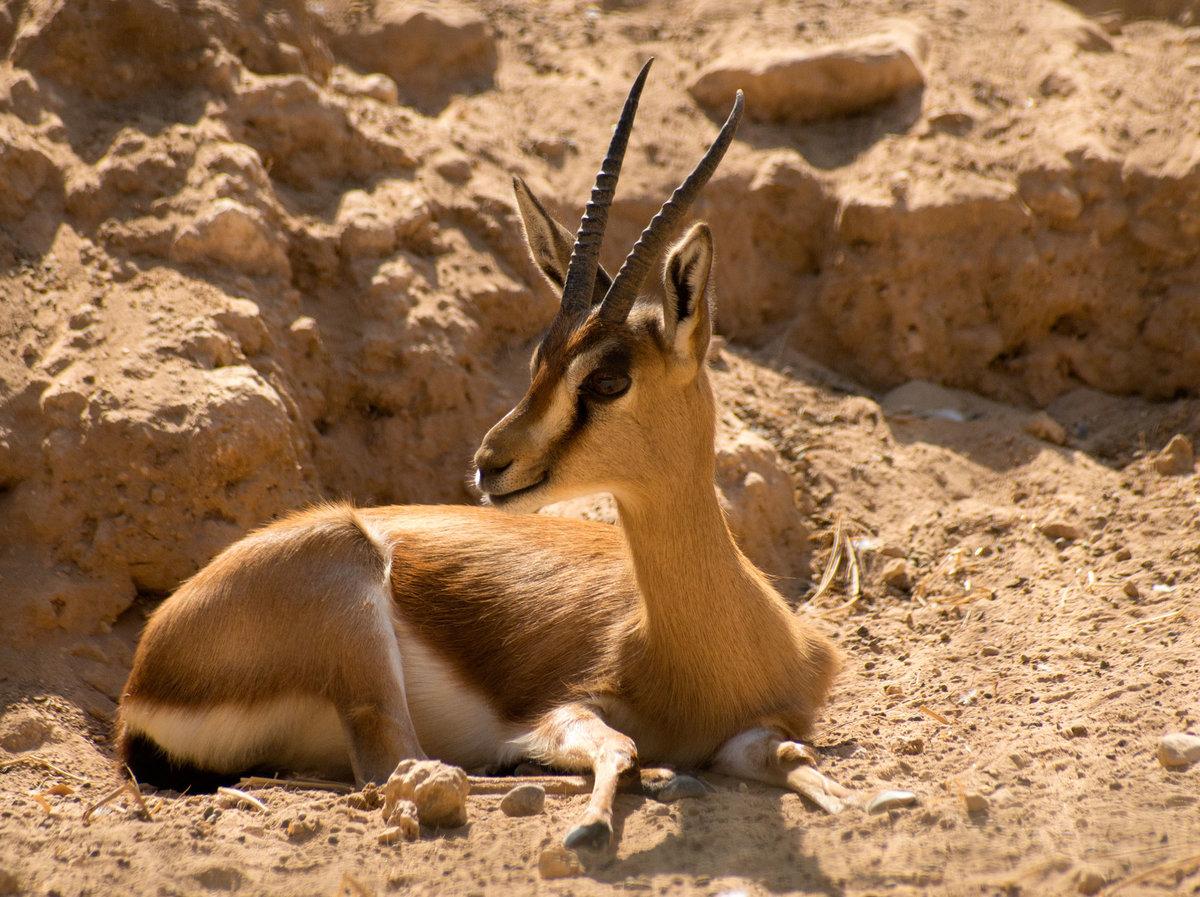 Животные пустыни в картинках